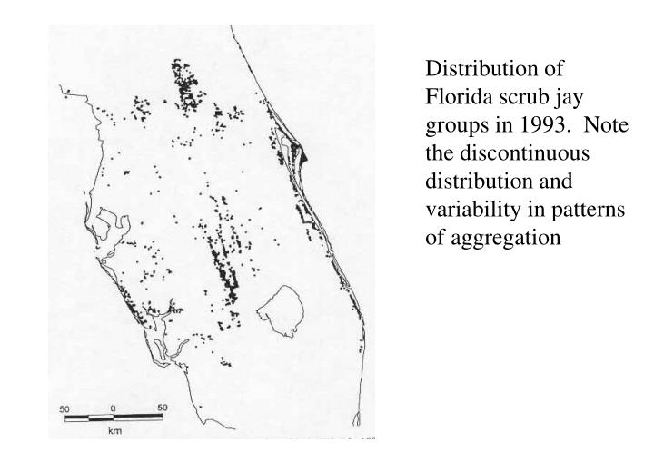 Distribution of Florida scrub jay groups in 1993.  Note the discontinuous distribution and variability in patterns of aggregation