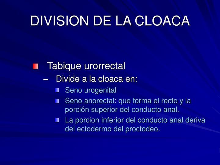 DIVISION DE LA CLOACA