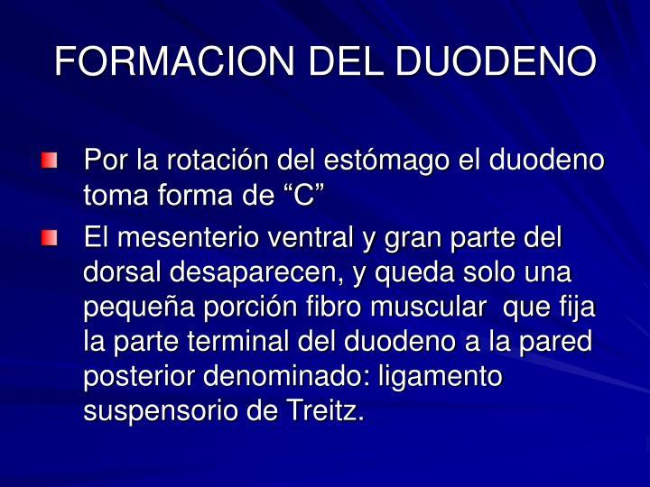 FORMACION DEL DUODENO