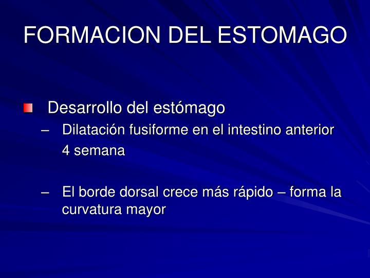 FORMACION DEL ESTOMAGO