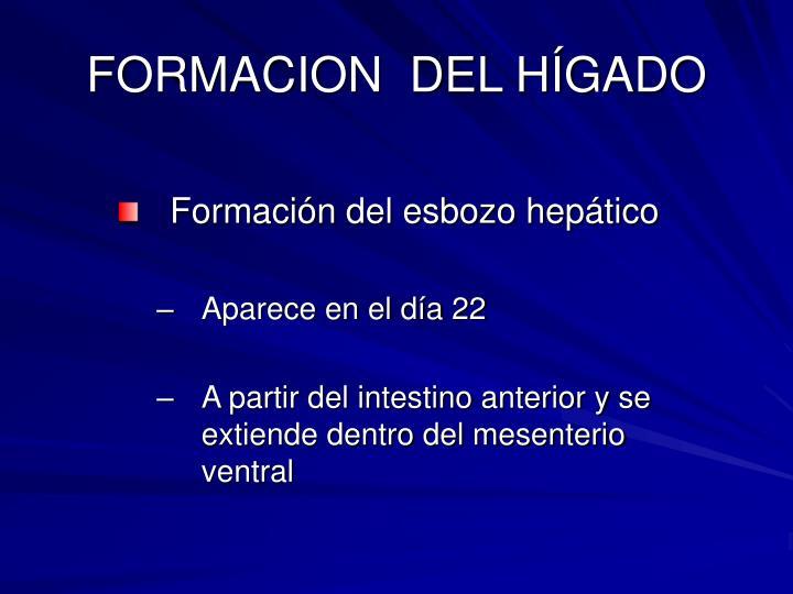 FORMACION  DEL HÍGADO