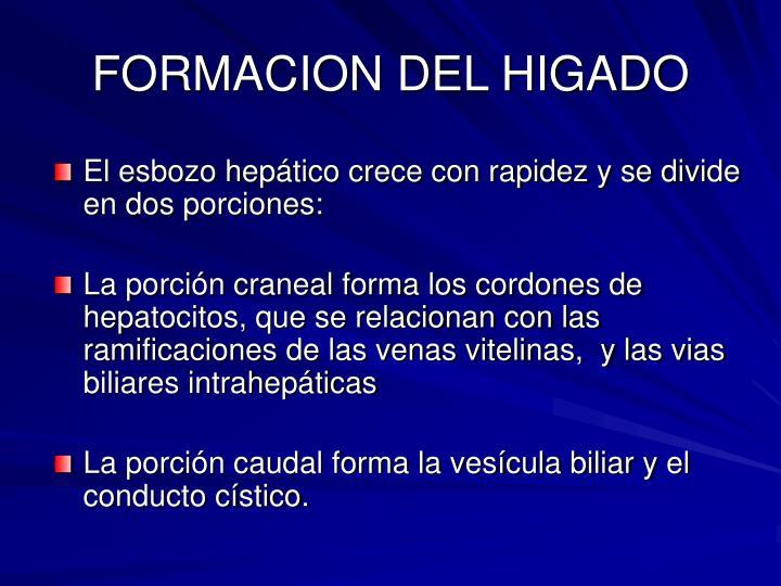 FORMACION DEL HIGADO