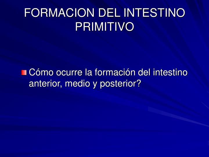 FORMACION DEL INTESTINO PRIMITIVO
