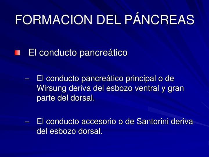 FORMACION DEL PÁNCREAS
