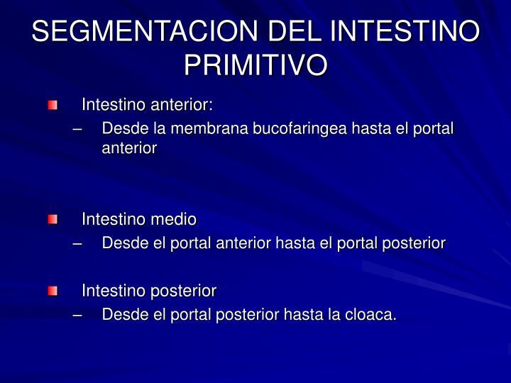 SEGMENTACION DEL INTESTINO PRIMITIVO