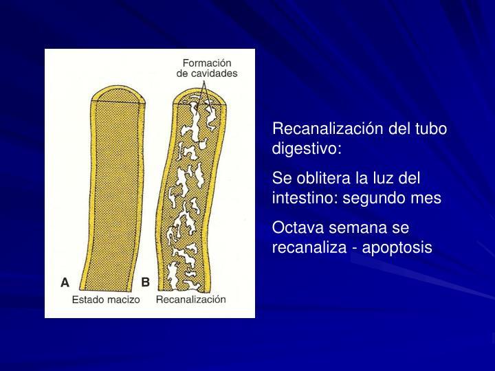 Recanalización del tubo digestivo: