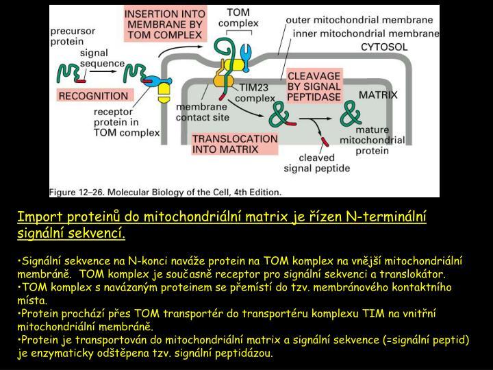 Import proteinů do mitochondriální matrix je
