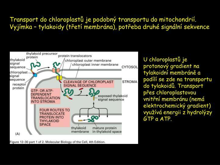 Transport do chloroplastů je podobný transportu do mitochondrií.