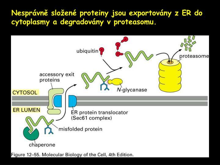 Nesprávně složené proteiny jsou exportovány z ER