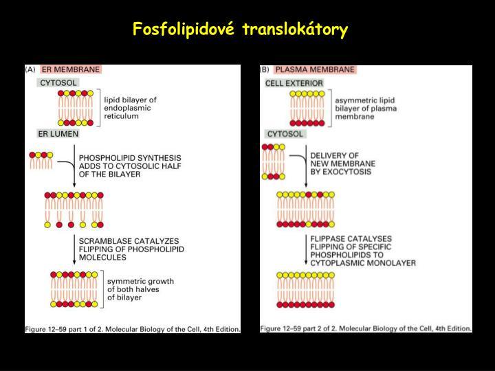 Fosfolipidové translokátory