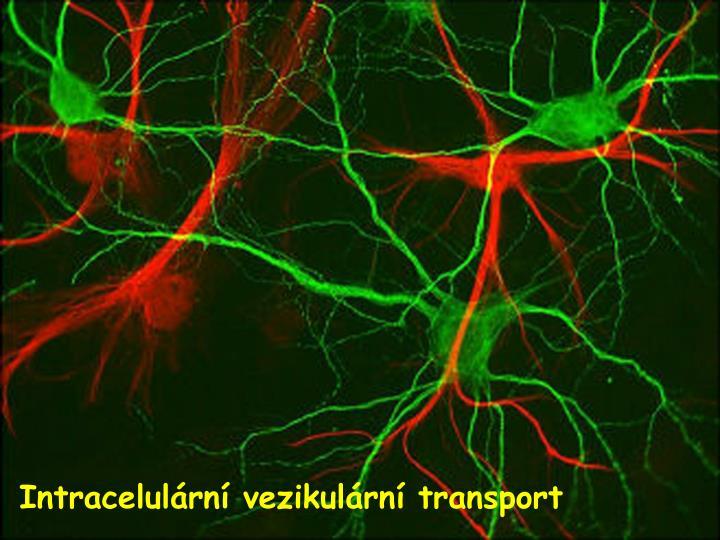 Intracelulární vezikulární transport