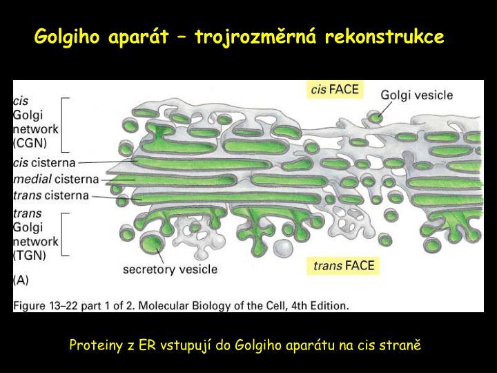 Golgiho aparát – trojrozměrná rekonstrukce