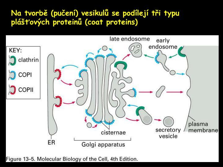 Na tvorbě (pučení) vesikulů se podílejí tři typu plášťových proteinů (
