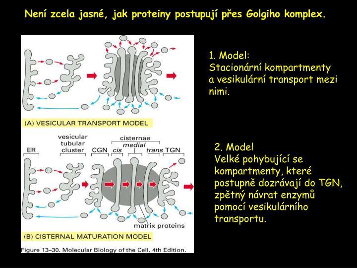 Není zcela jasné, jak proteiny postupují přes Golgiho komplex