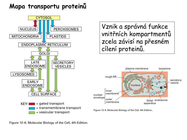 Mapa transportu proteinů