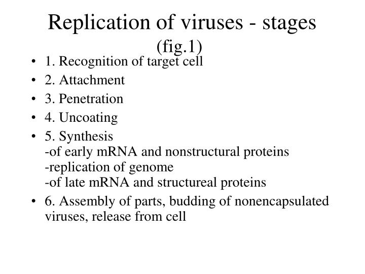 Replication of viruses - stages