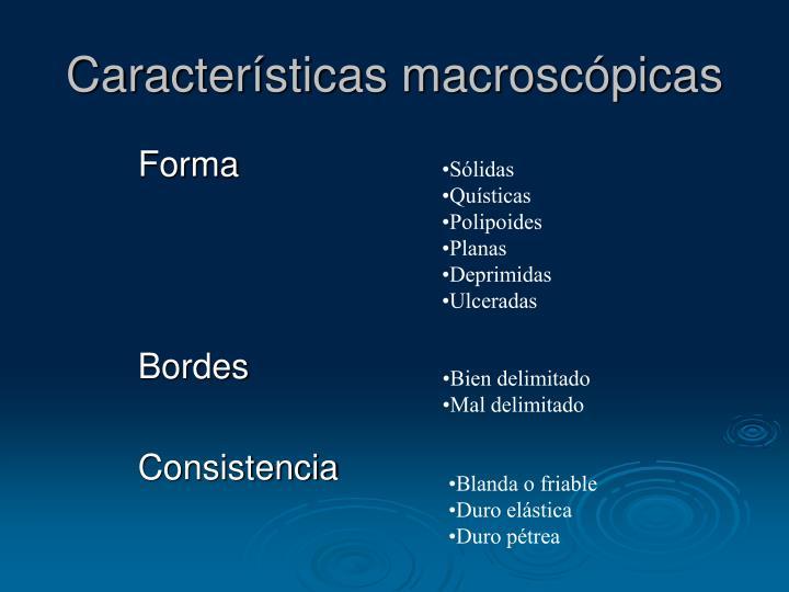 Características macroscópicas
