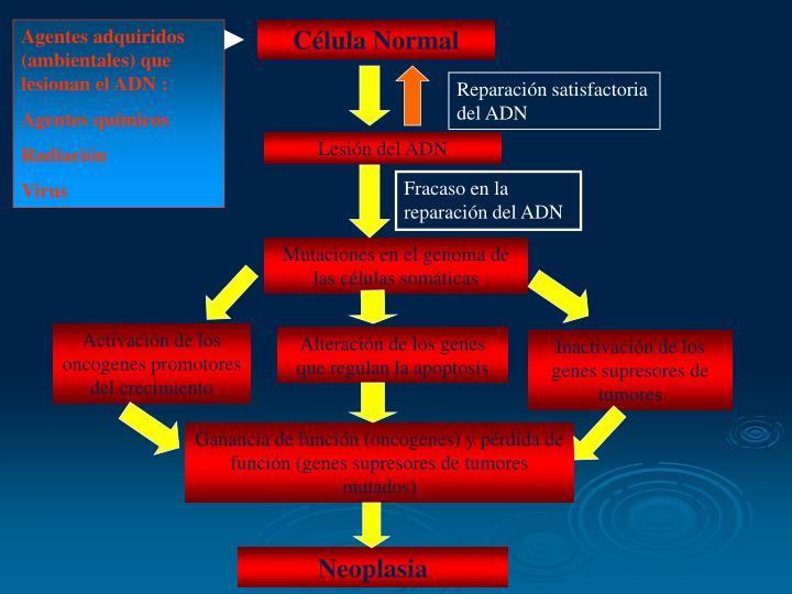 Agentes adquiridos (ambientales) que lesionan el ADN :