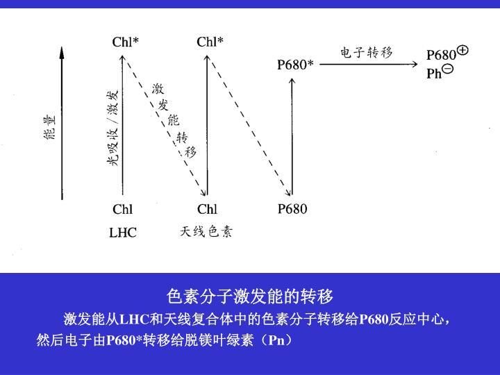 色素分子激发能的转移