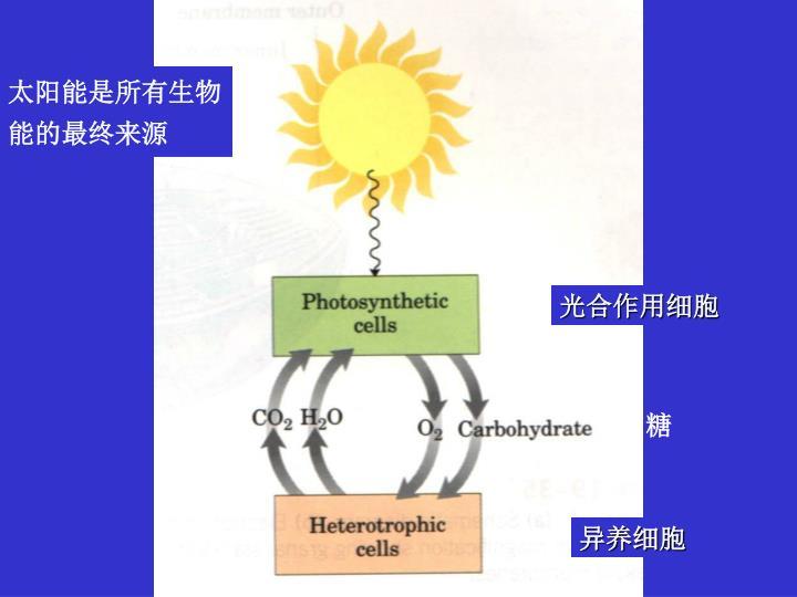 太阳能是所有生物能的最终来源
