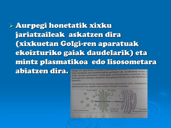 Aurpegi honetatik xixku jariatzaileak  askatzen dira (xixkuetan Golgi-ren aparatuak ekoizturiko gaiak daudelarik) eta mintz plasmatikoa  edo lisosometara  abiatzen dira.