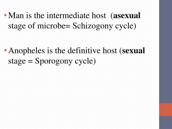 Man is the intermediate host  (