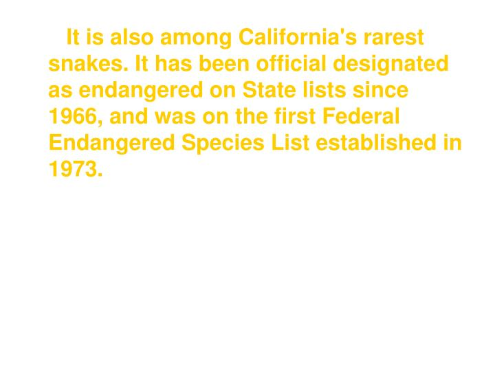 It is also among California's rarest snakes. It has been official designated as endangered on State lists since 1966, and was on the first Federal Endangered Species List established in 1973.