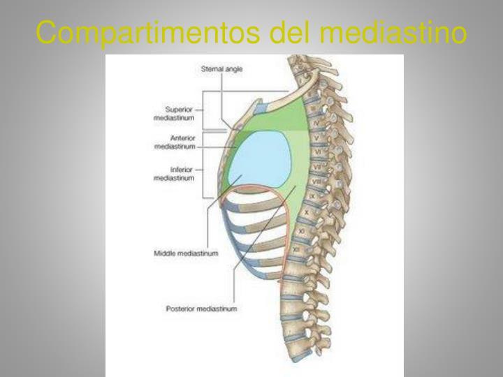 Compartimentos del mediastino