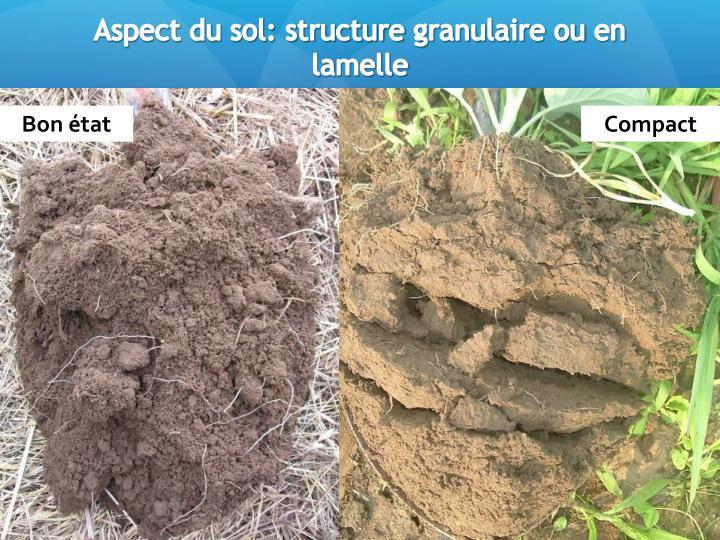 Aspect du sol: structure