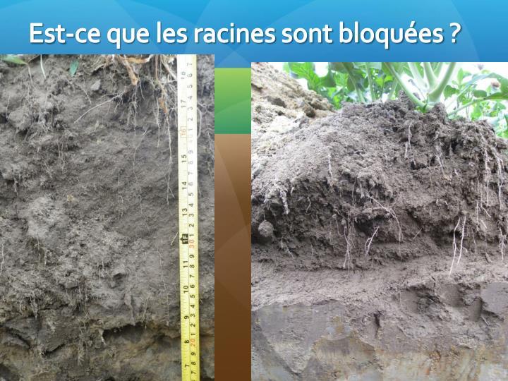 Est-ce que les racines sont bloquées ?