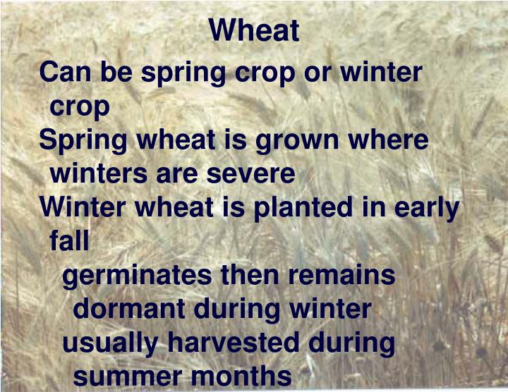 Can be spring crop or winter crop