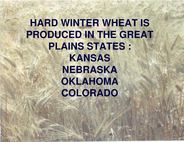 HARD WINTER WHEAT IS PRODUCED IN THE GREAT PLAINS STATES :