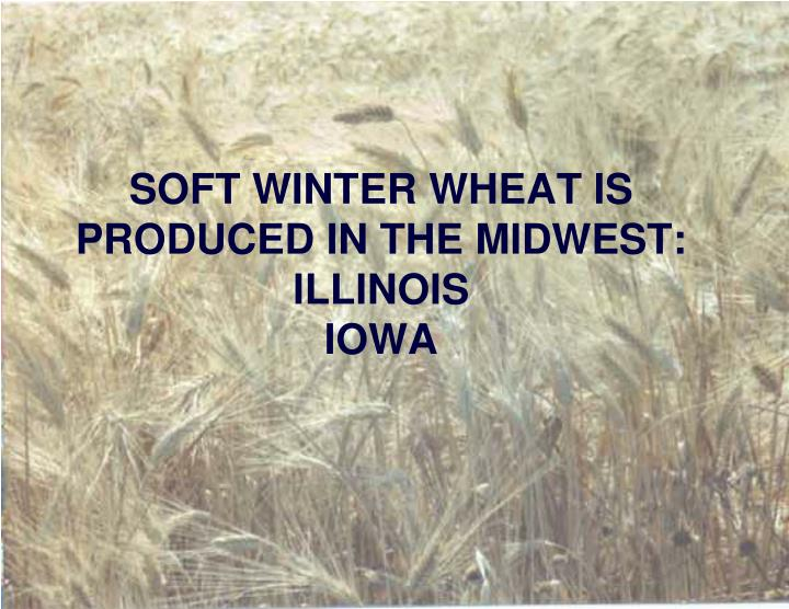 SOFT WINTER WHEAT IS PRODUCED IN THE MIDWEST: