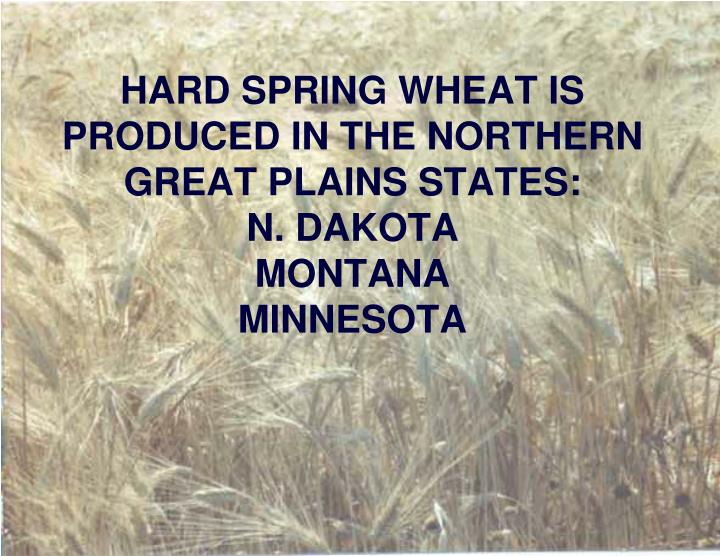 HARD SPRING WHEAT IS PRODUCED IN THE NORTHERN GREAT PLAINS STATES:
