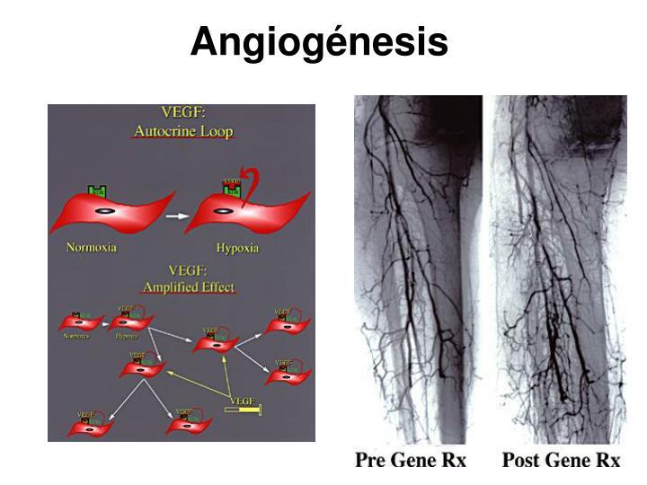 Angiognesis