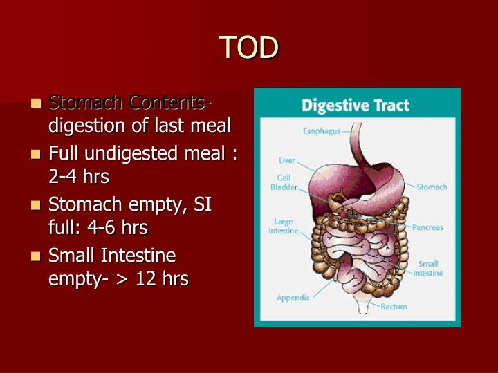 Stomach Contents-