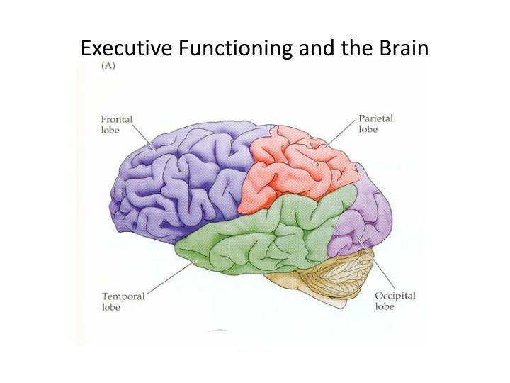 Executive Functioning and the Brain