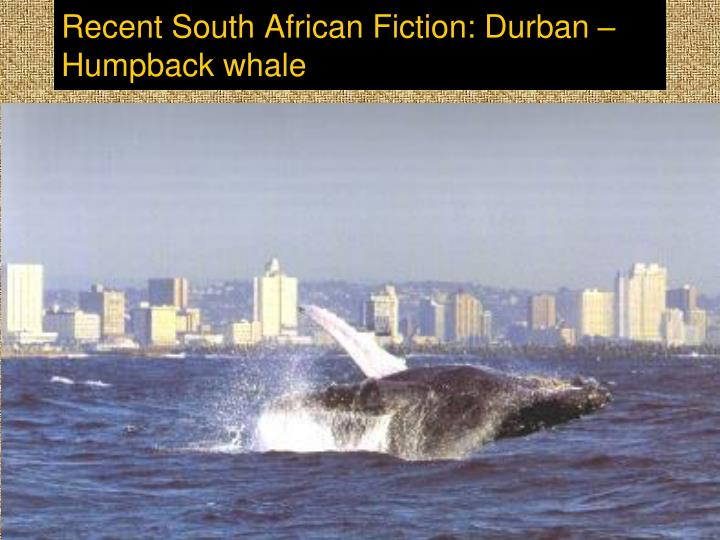 Recent South African Fiction: Durban – Humpback whale