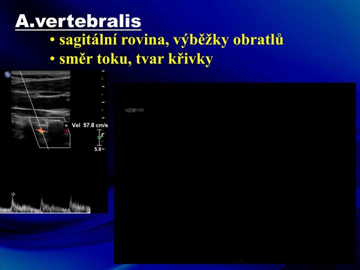 A.vertebralis