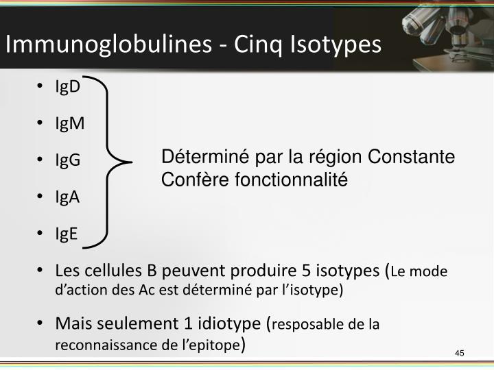 Immunoglobulines - Cinq Isotypes