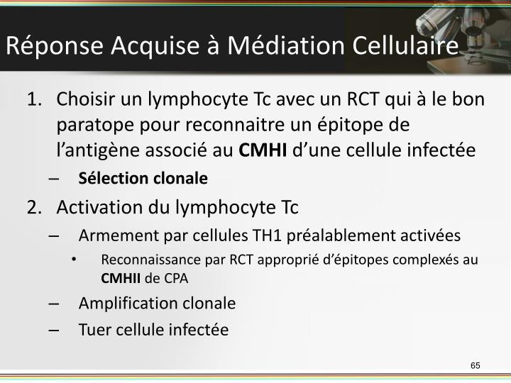 Réponse Acquise à Médiation Cellulaire