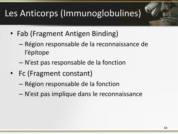 Les Anticorps (Immunoglobulines)