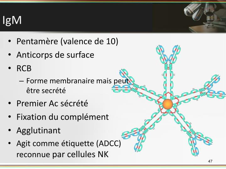 Pentamère (valence de 10)