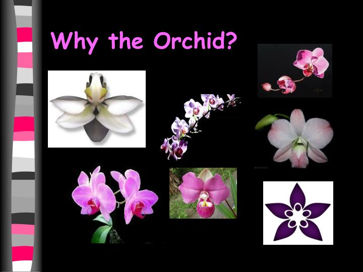 Why the Orchid?