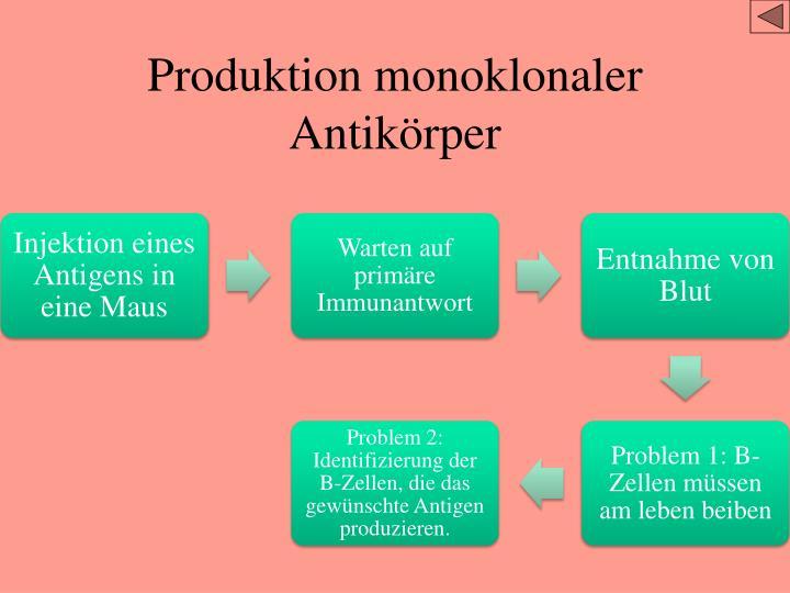 Produktion monoklonaler Antikörper