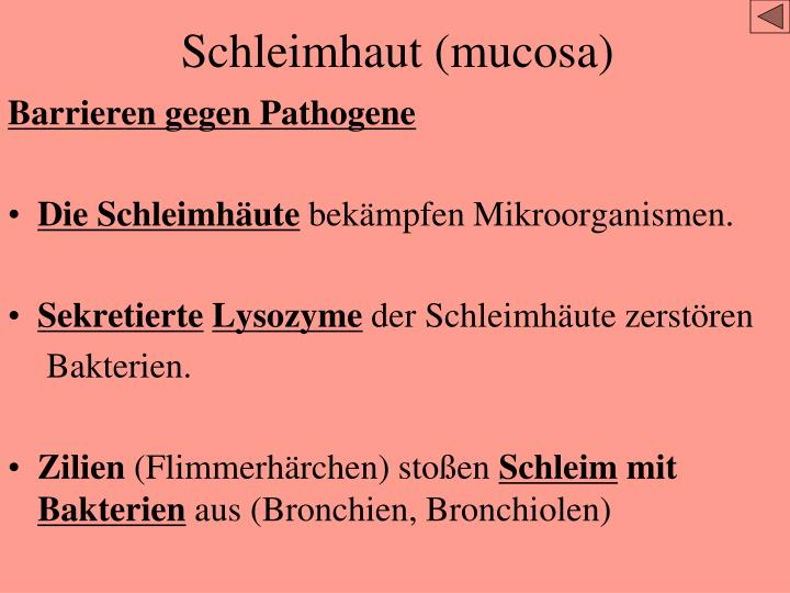 Schleimhaut (mucosa)