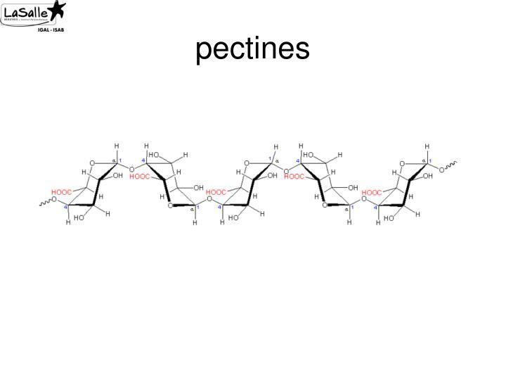 pectines