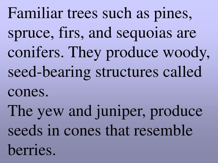 Familiar trees such as pines, spruce, firs, and sequoias are conifers. They produce woody, seed-bearing structures called cones.