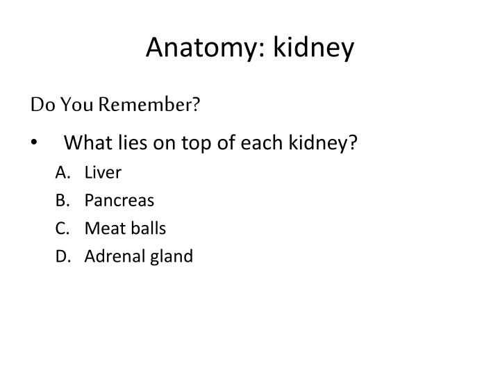 Anatomy: kidney