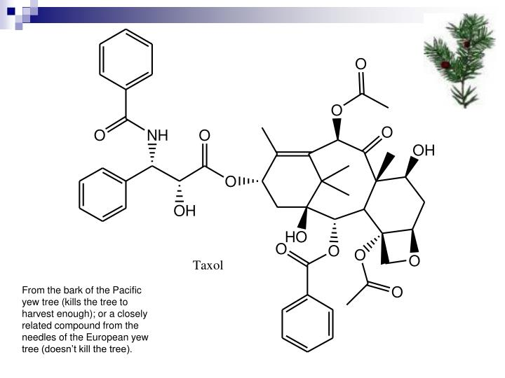 From the bark of the Pacific yew tree (kills the tree to harvest enough); or a closely related compound from the needles of the European yew tree (doesn't kill the tree).